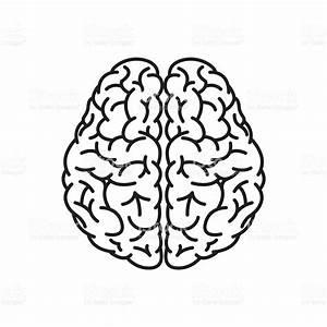 Menschliche Gehirn Kontur Aufsicht Vektor Illustration ...