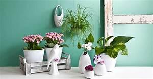 Große Pflanzen Fürs Wohnzimmer : gro e zimmerpflanzen bis zu 70 rabatt westwing ~ Michelbontemps.com Haus und Dekorationen