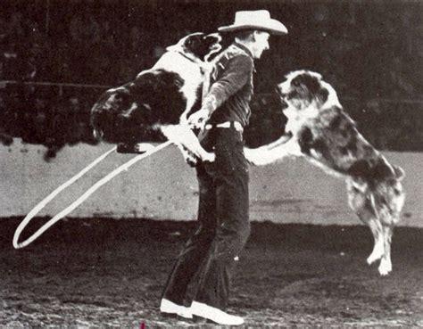las rocosa australian shepherds