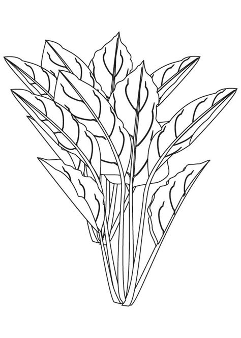 spinach flowering plant coloring page