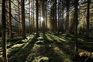 Klimafitter Wald BMLFUW