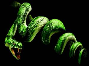 Snake photo by NewBeginnings2 - animated gif #2372557 by ...