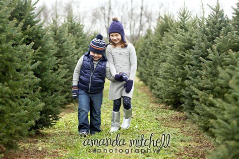 cut your own christmas tree lexington ky nieman s tree farm kentucky tree association