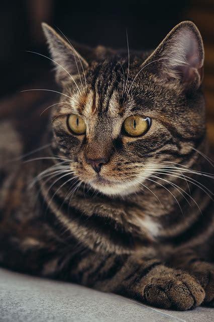 diarrhea  cats  symptoms  treatment dogalize