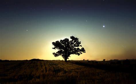 fond d ran de bureau tlcharger fond d 39 ecran arbre nuit sombre fonds d