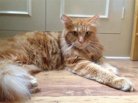 Grooming Aggressive Cats  Anita Kelsey Cat Blogger