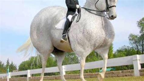 fat horses