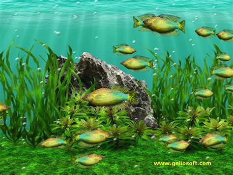 Animated Fish Tank Wallpaper Windows 7 - free moving aquarium wallpaper wallpapersafari