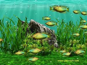 Moving Melanotaenia Duboulayi Fish Screensaver and Free ...