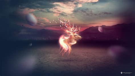 deer fantasy wallpapers hd  desktop backgrounds