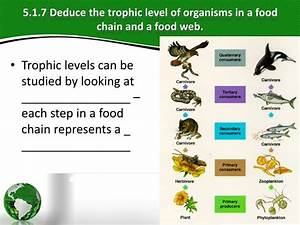 Ppt - Ecology Powerpoint Presentation
