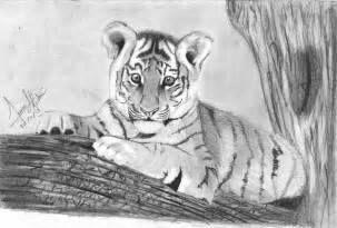 Baby Tiger Drawings