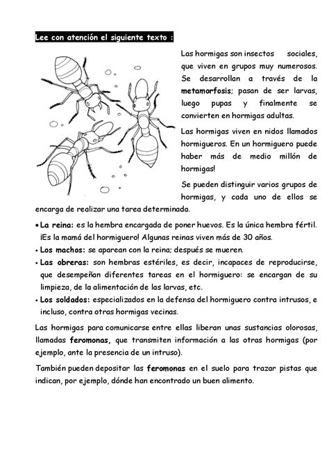 20textoscompresionlectora014  Imagenes Educativas