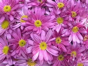 Bilder Blumen Kostenlos Downloaden : blumen kostenlose hintergrundbilder ~ Frokenaadalensverden.com Haus und Dekorationen