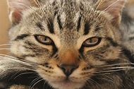 Can Cats Cry When They Are Sad