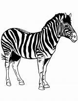 Zebra Printable Stencil Template Coloring Zebre Coloriage Dessin Stencils Templates Colouring Ausmalbilder Drawing Cartoon Animal Pdf Disegno Realistic Ausmalbild Designs sketch template