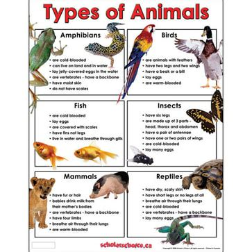 Classification of biodiversity Ms Frost A world of