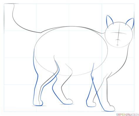 draw  realistic cat step  step drawing tutorials