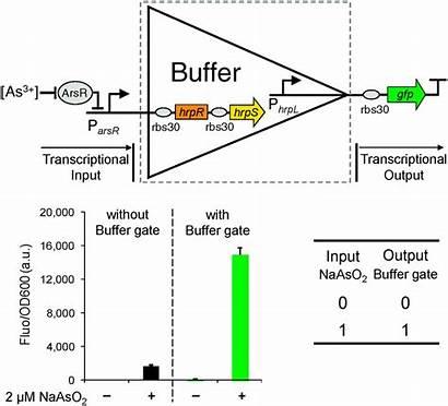 Gate Input Buffer Logic Gates Molecular Rsc