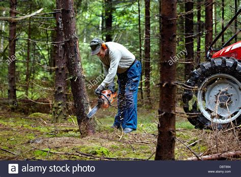 Man Cutting Trees In Forest With Chain Saw Stock Photo