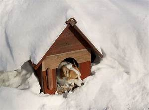 Diy insulated dog house how to tips and best practices for Best insulated dog house for cold weather