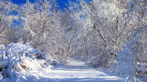 Still White Still White Snowy Nature Wallpaper Nature Wallpapers