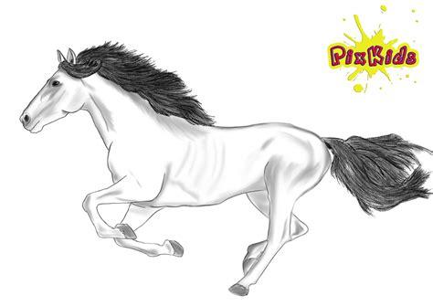 ausmalbild pferd kostenlose malvorlagen