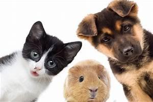 Mit Katze Umziehen : umzug mit hund und katze und anderen kleintieren ~ Michelbontemps.com Haus und Dekorationen