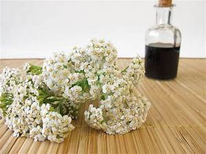 yarrow insect repellant bug repellent repellent better yarrow ...  Heart Diseases Yarrow