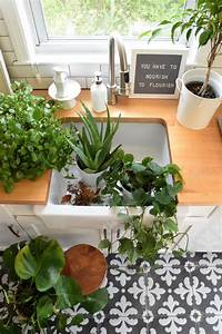 5, House, Plants, That, Are, Low, Maintenance-, My, Tips, On, Keeping, Them, Alive
