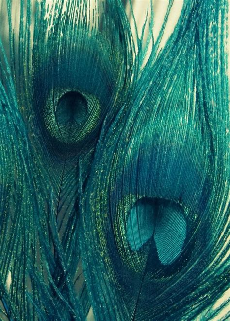 peacock green color 495 best branding teal things images on color