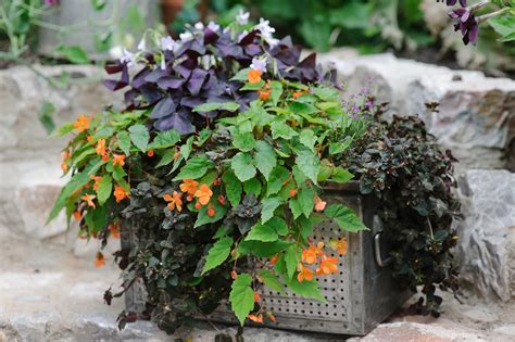 potted plants for shaded areas container plants for shade gardenersworld com