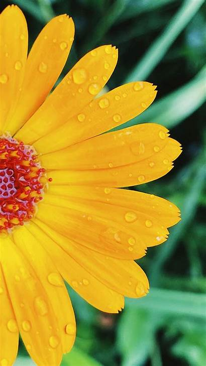 Flower Petals Drops Macro Yellow Note Samsung