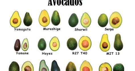 deceptively healthy avocado health benefits