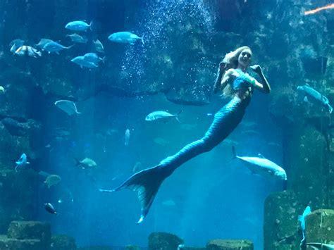 la rencontre avec la sir 232 ne de l aquarium de cineaqua pmgirl