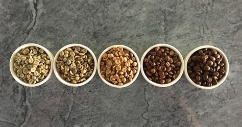 Coffee is a brewed drink prepared from roasted coffee beans, the seeds of berries from certain coffea species. All About Coffee Roasting   Caffe Luxxe