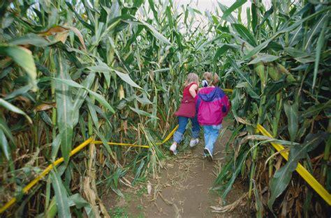 Best Corn Mazes Near Washington Dc