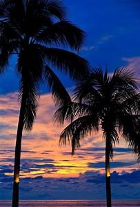 Bilder Von Palmen : die 25 besten ideen zu sonnenuntergang meer auf pinterest sonnenunterg nge sonnenunterg nge ~ Frokenaadalensverden.com Haus und Dekorationen