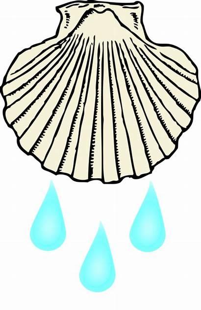 Baptism Shell Drawing Clipart Transparent Chrism Sacrament