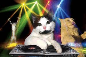 cat dj will kaskade s new rival win the next competition for best dj