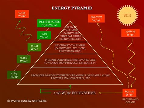 Ecology  What Does The Energy In An Energy Pyramid. What Do Mice Droppings Look Like. Best Saas Accounting Software. Milwaukee Art Museum Architect. Mahoning Unlimited Classroom. Graduate Social Work Programs. Perdona Si Te Llamo Amor Pelicula. Pmp Certification Online Course. What Is The Free Credit Report Website