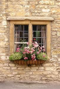 Hydrangea, Hill, Cottage, Windowboxes