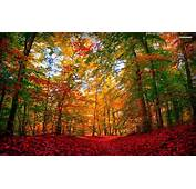 Extra Ordinary Autumn Forest Wallpapers