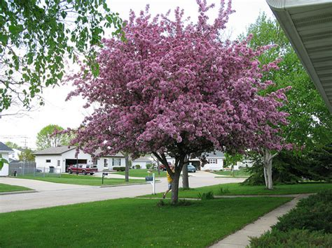 best small trees for front yard small front yard tree www pixshark com images galleries with a bite