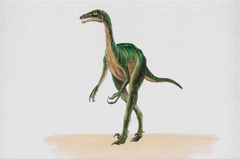 troodon dinosaur pictures