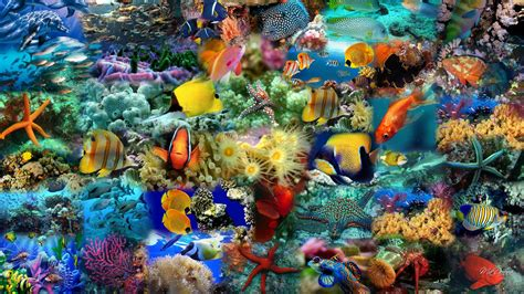 Colourful Animal Wallpaper - animals fishes colorful fish bestepics litle pups