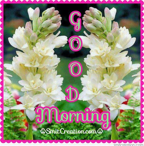 good morning flowers pictures  graphics smitcreationcom