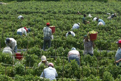 cuantas visas temporales de trabajo  guatemaltecos