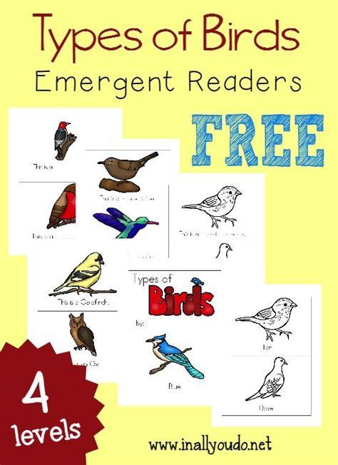 31 best Bird watching and identification for preschoolers