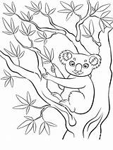 Koala Coloring Pages Animals Animal Recommended sketch template
